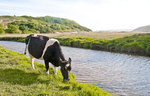 Friends of the Earth Pembrokeshire Food and Farming campaigning