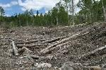 "BiofuelWatch denounces new ""subsidies for forest destruction and air pollution"""